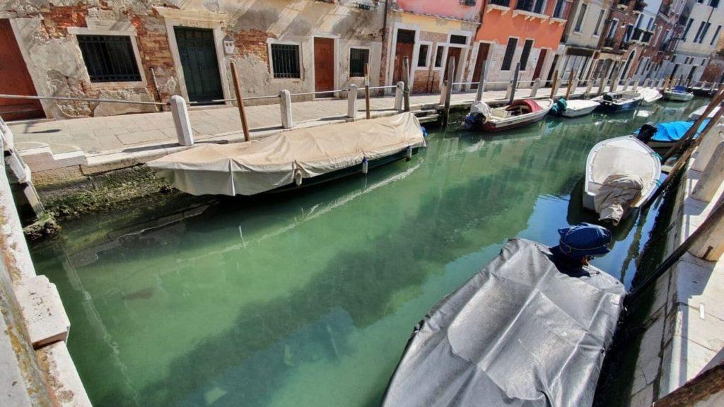 Pesci a Venezia e delfini a Cagliari: la natura non è in quarantena, anzi