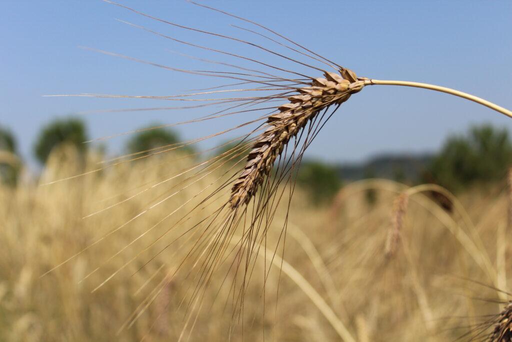 Ripartiamo da un'agricoltura sostenibile!